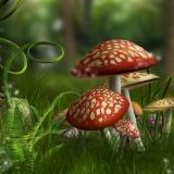 Το Άβαταρ του/της Mushroomgr