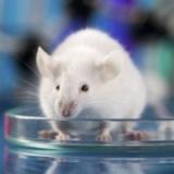 Το Άβαταρ του/της test_mice